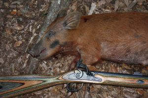 E-mail Detail of small Ossabaw hog and RMC flintlock