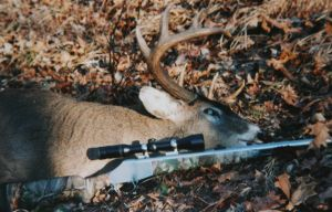 The author's Missouri deer taken on a hunt with the Knight Revolution.