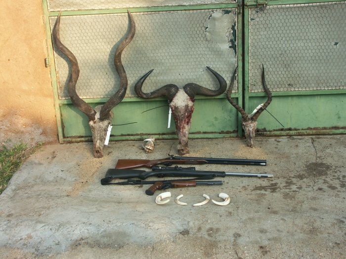 The three guns and the trophies that they took in  South Africa.