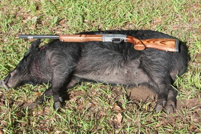 Woodman Hog 1