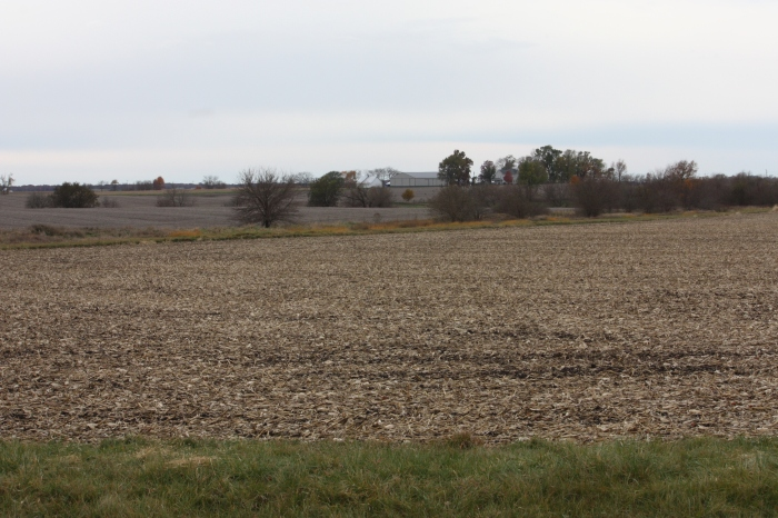 Mn fields